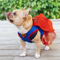 """DC Comics Pet Halloween Superman Dress, <a href=""""http://www.petsmart.com/featured-shops/costumes/dc-comics-trade-pet-halloween-superman-dress-zid36-30456/cat-36-catid-800791?var_id=36-30456&_t=pfm%3Dcategory"""">$13.99—$15.39</a>"""