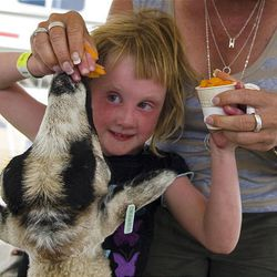 Gwyneth Smith, 4, of Salt Lake City, is guided by her grandmother, Vicki Crocker, as they feed a goat carrots Wednesday at the Salt Lake County Fair in South Jordan. The fair runs through Saturday.