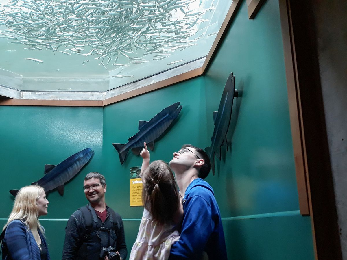 A group of four people stand in front of a blue-green wall with salmon-shaped art attached to it, including, to the right, a man in a blue shirt holding a child with long hair pointing up. A window at the top shows the room is underwater.