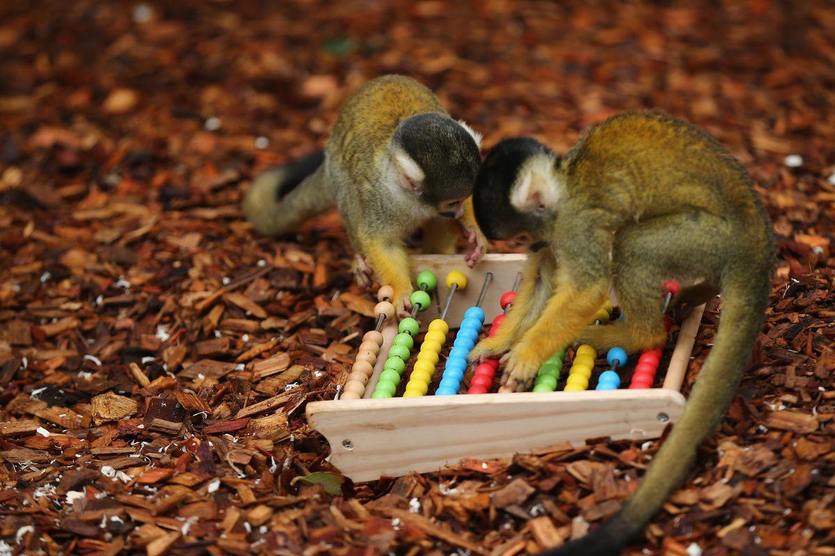 London Zoo's Annual Animal Stocktake