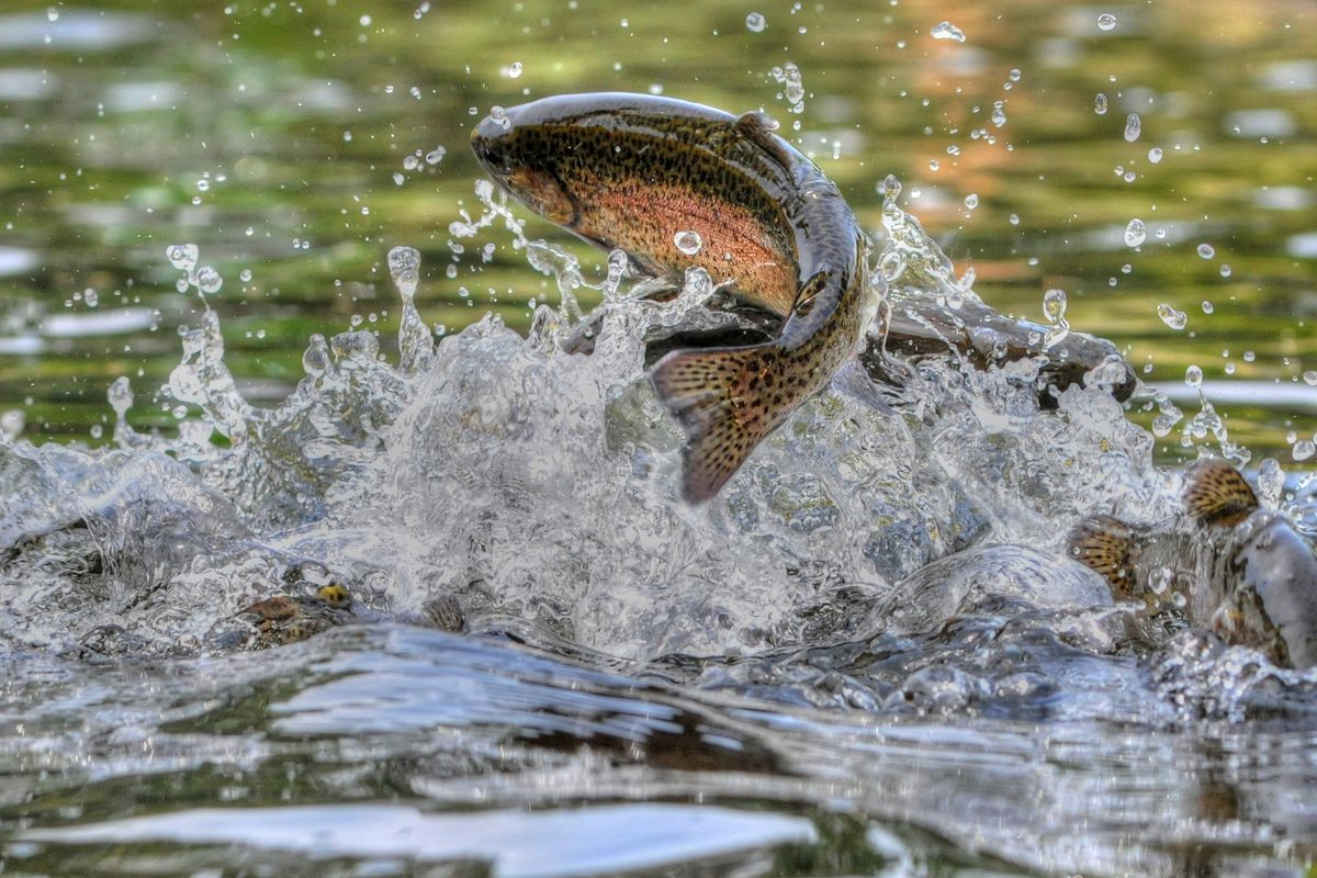 The Utah Division of Wildlife Resources said Friday it has discovered three illegally stocked fish species in Kolob Reservoir.