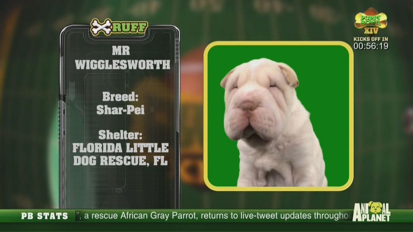 Puppy Bowl 2018 results: Team Fluff brings home the Lombarky