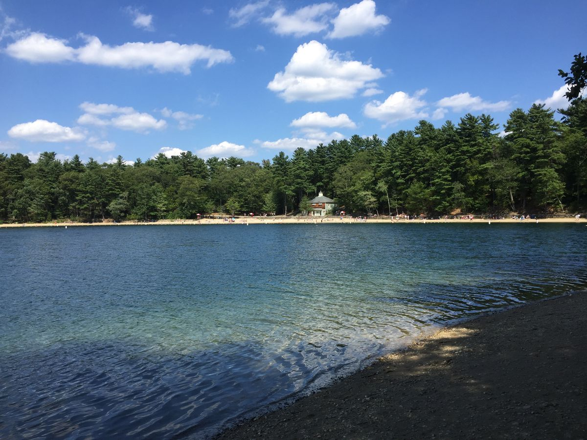A view of Walden Pond in Concord, with a tree-lined beach in the background