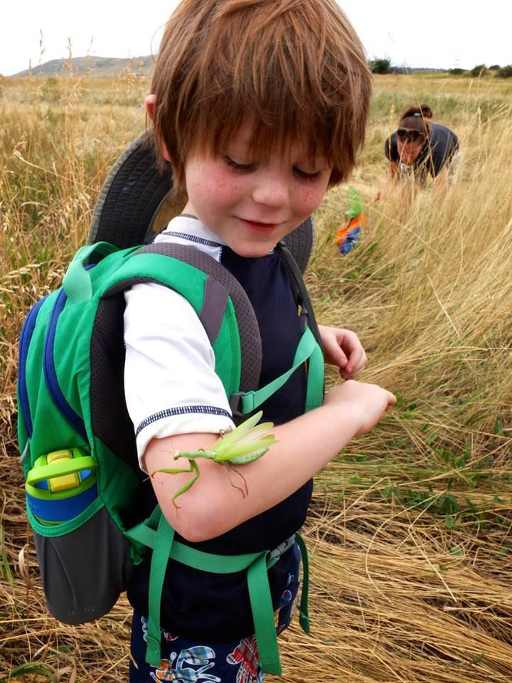A kindergarten student at Centennial on an insect expedition.