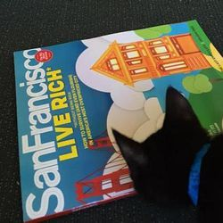 """Over at San Francisco magazine, Uber kittens caught up on a little reading. Image via <a href=""""https://twitter.com/sanfranmag/status/527571274546302977"""">Twitter</a>."""