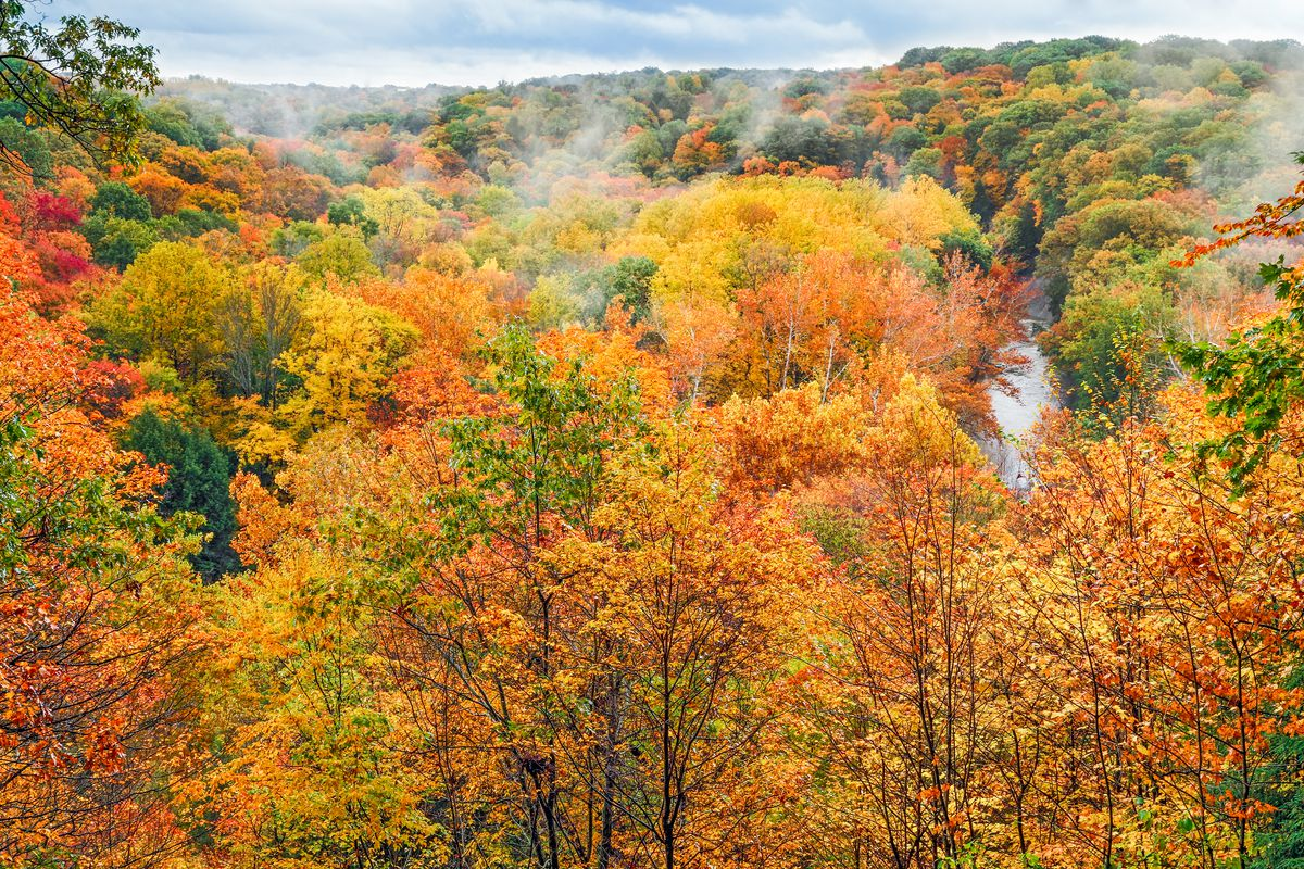 A valley of fall foliage with trees in yellows, oranges, and greens. Fog rises off of the trees in the distance.