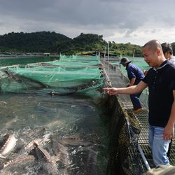A sturgeon farm at the Da Mi hydroelectric resovoir lake in Tanh Linh district, Vietnam's central southern province of Binh Thuan.