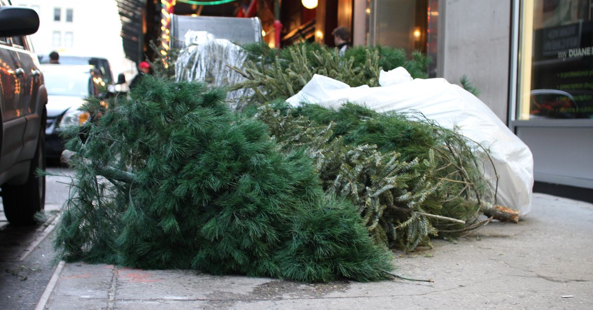 - How To Dispose Of Your Old Christmas Tree In NYC - Curbed NY