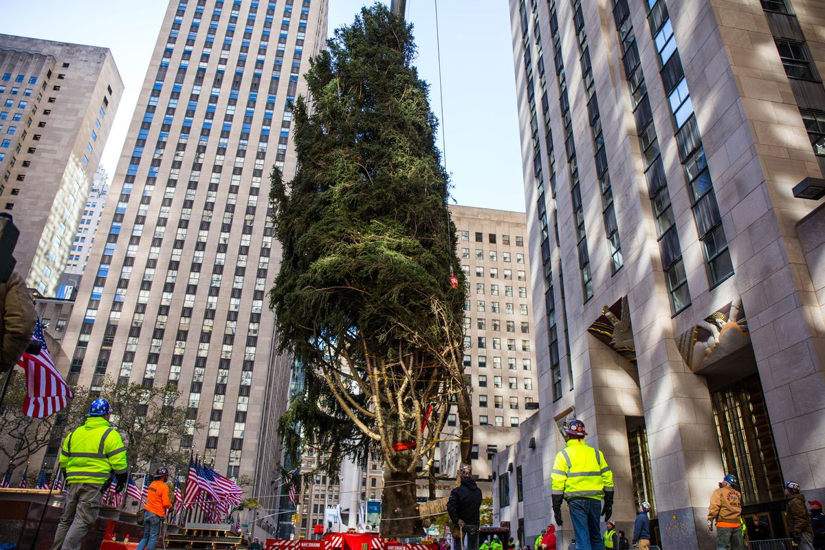 2017 Rockefeller Center Christmas Tree has arrived in NYC ...