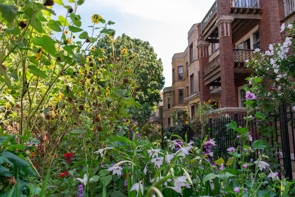 Chicago Landscaping Ideas For Front Yards Gardens Spring Plants
