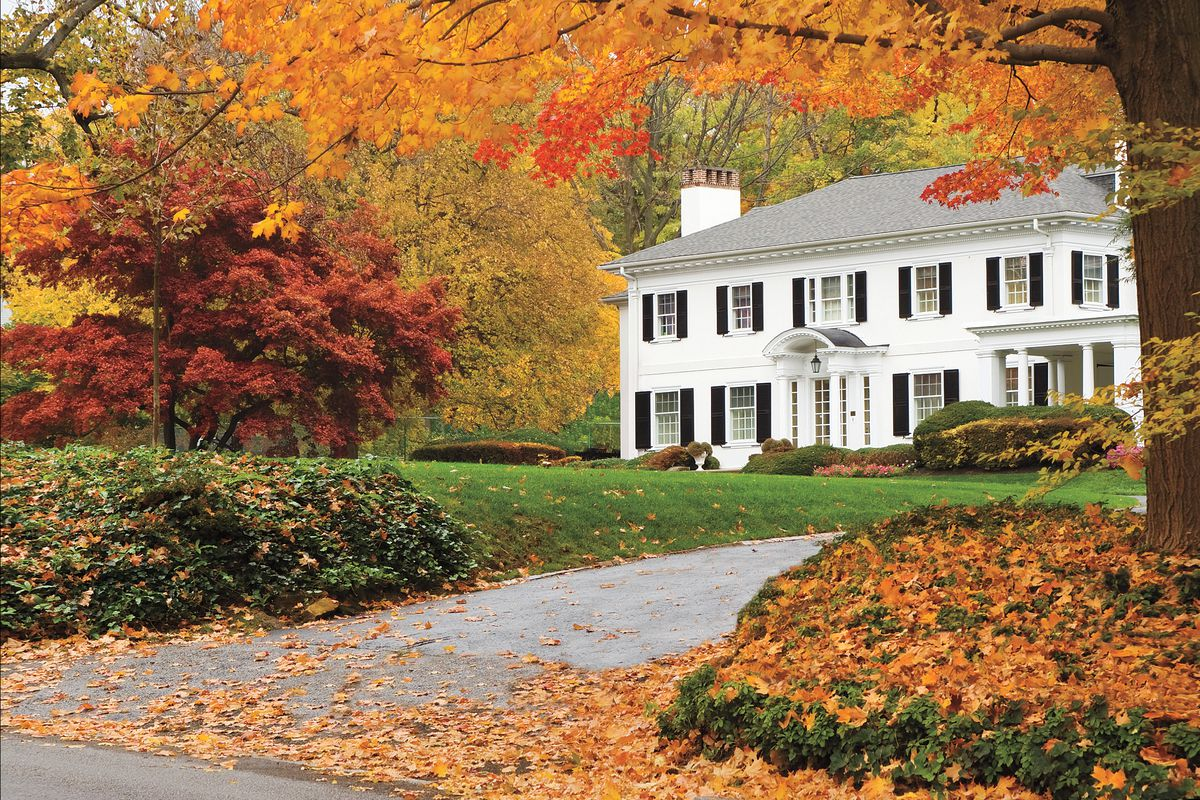 10 Best Trees And Shrubs For Fall Color This Old House