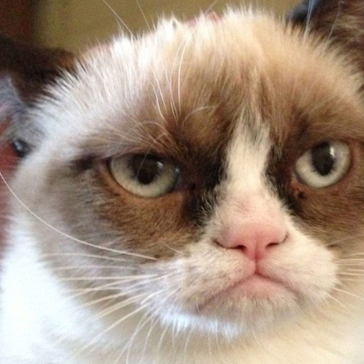 Grumpy Cats New Movie Shows She Should Have Stayed A Meme The Verge