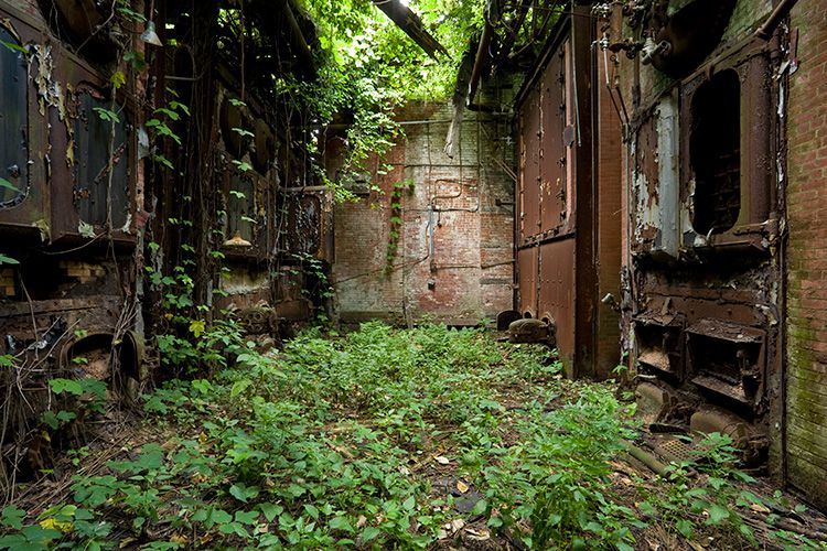 North Brother Island. Wildlife grows amongst abandoned buildings.