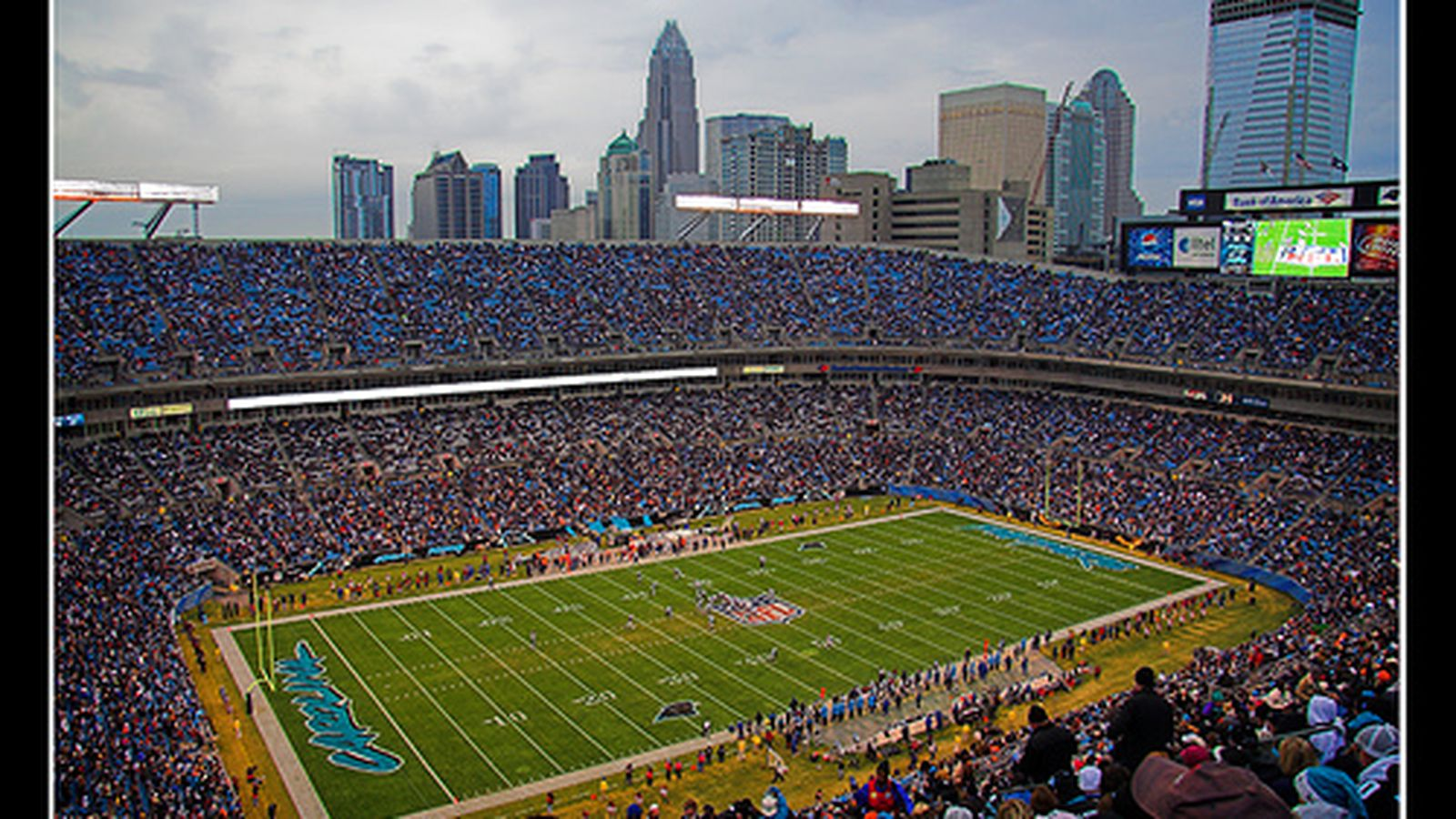 Panthers Name New Public Address Announcer Cat Scratch
