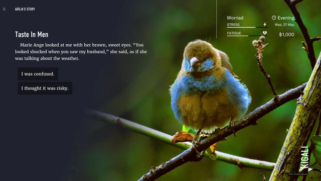Wanderlust: Travel Stories - a bird perches on a branch