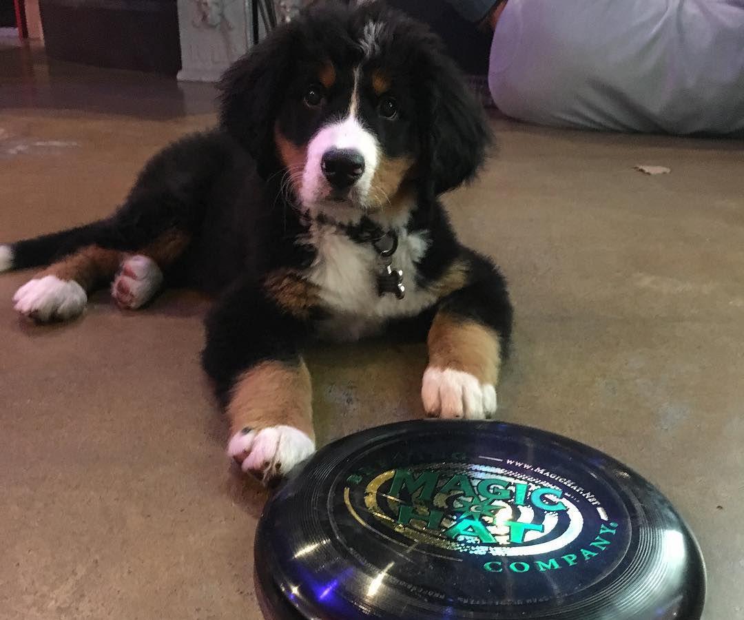 A puppy at Magic Hat