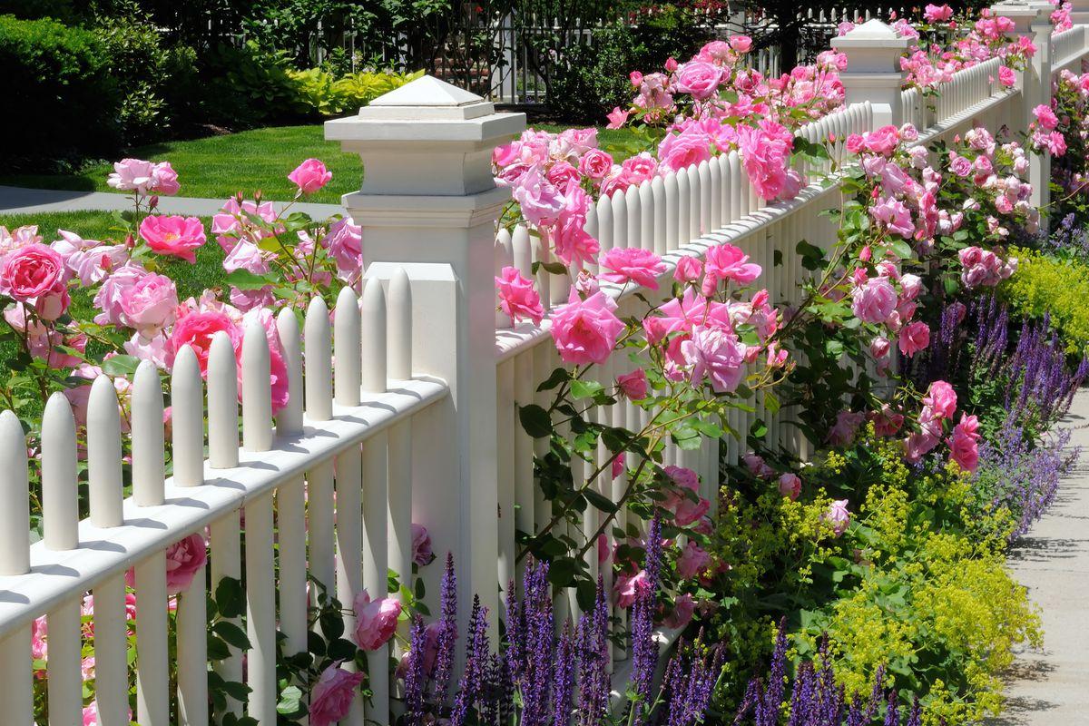 Fence along sidewalk with flowers.