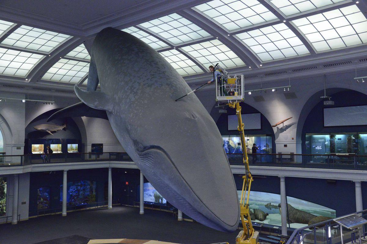 American Museum Of Natural History Membership