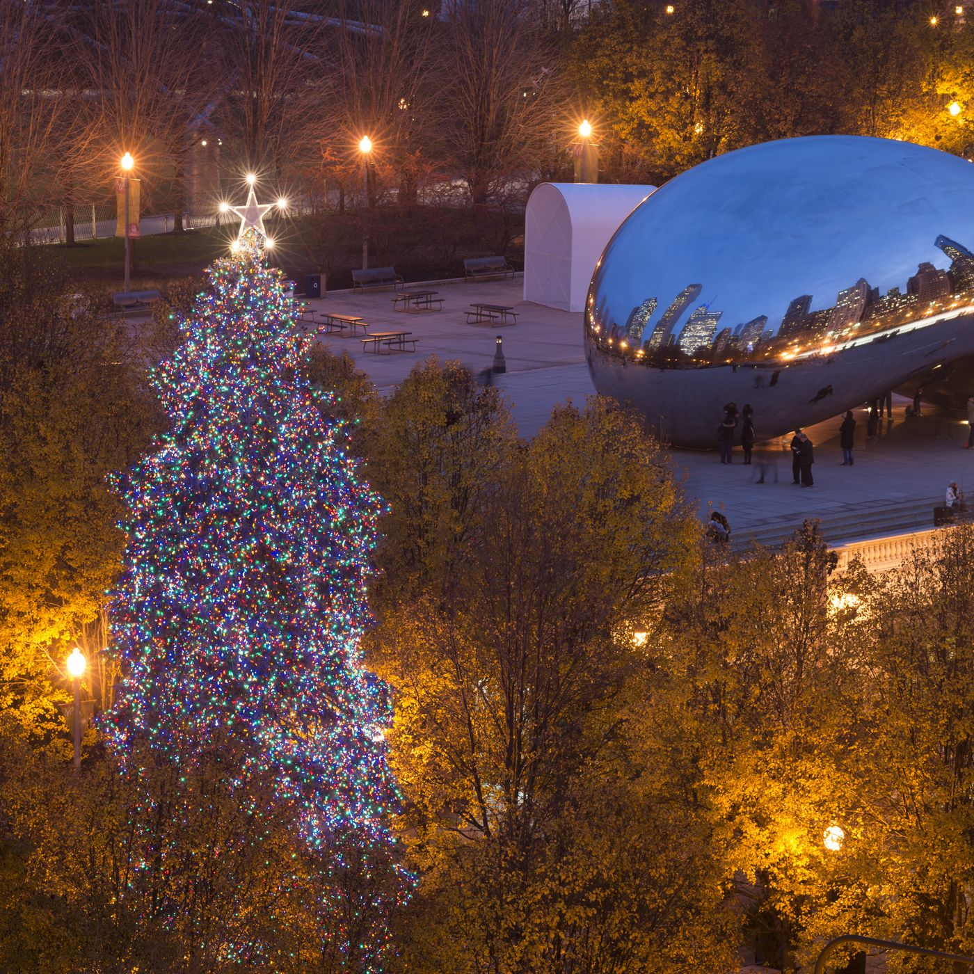 Annual Chicago Christmas Tree Contest Is Underway Chicago Sun Times
