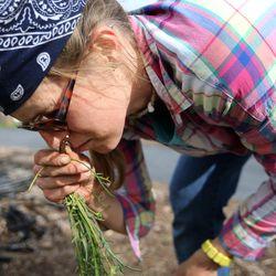Christina Stanley, collective plots coordinator for Rose Park Community Garden, smells Western salsify at the Rose Park Community Garden in Salt Lake City on Monday, April 17, 2017.