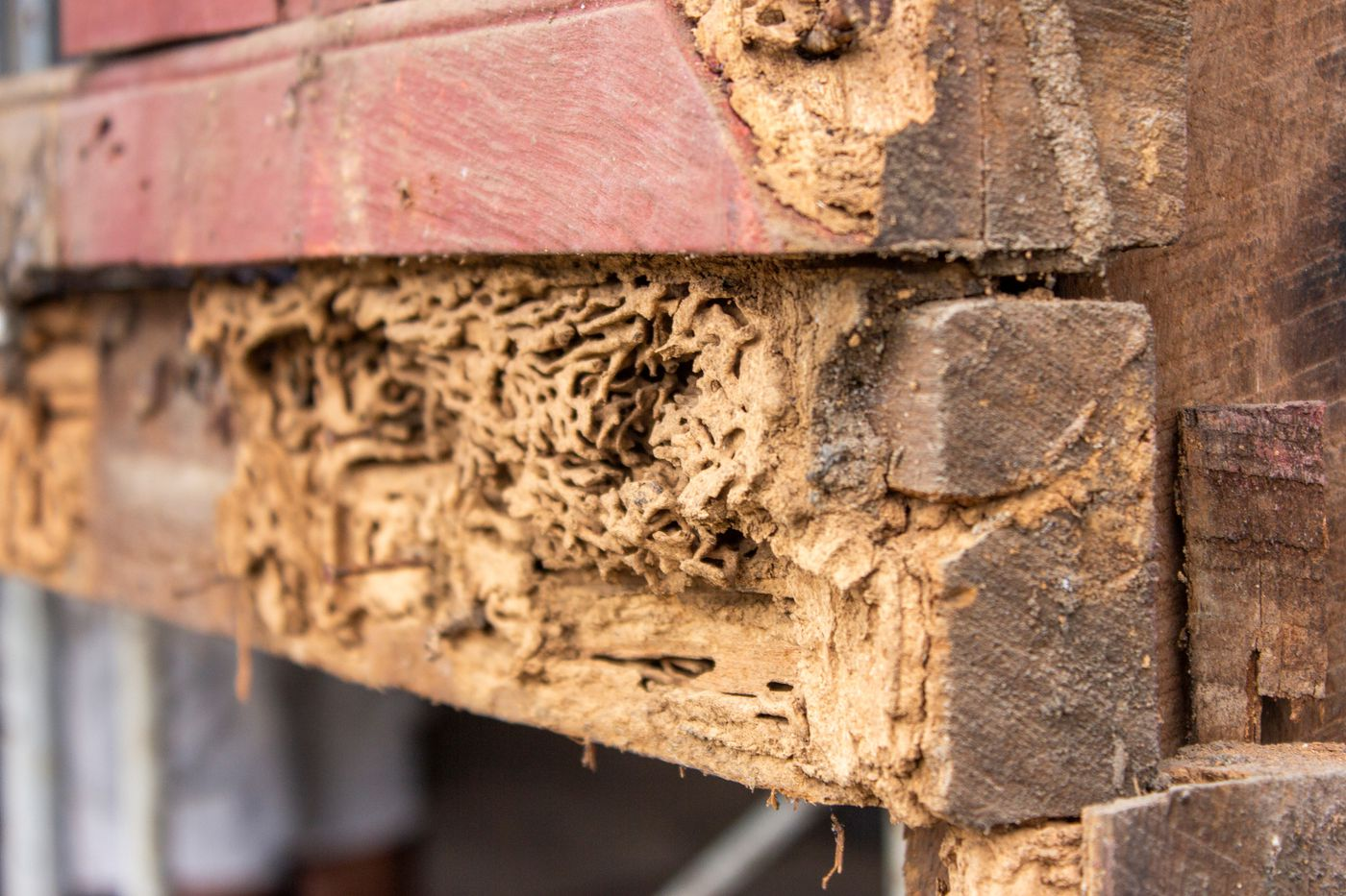 How Do You Get Rid Of Termites This Old House