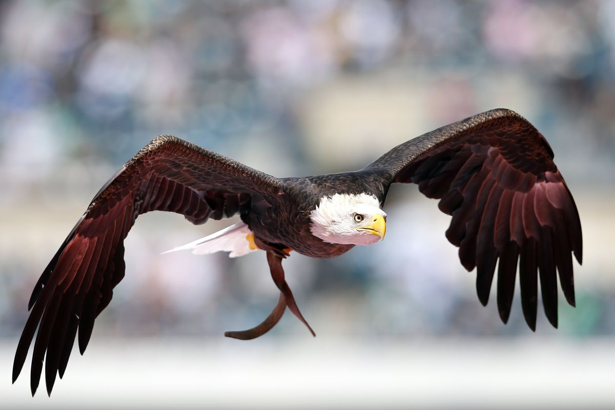 No pictures of American's mascot, if they even have one, but this will do just fine.
