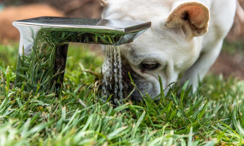 Dog drinking from fountain