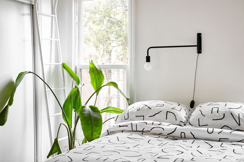 A large plant sits near a window and a bed with black and white patterned bedding.