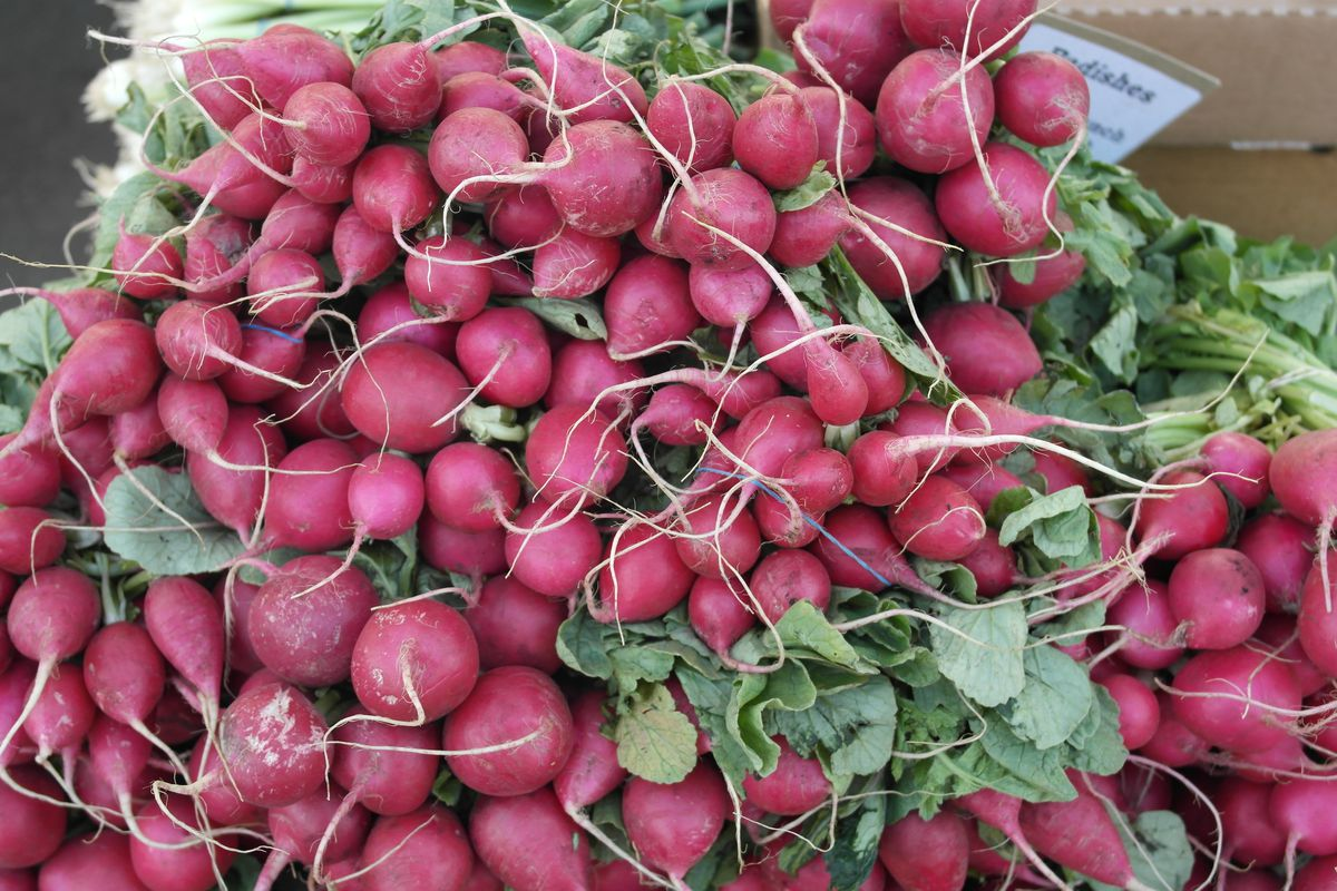 Radishes are plentiful at Farmers Markets throughout the city and suburbs.   Mike Isaacs\Sun-Times