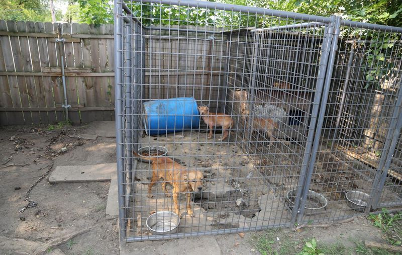 Caged dogs were found in the backyard of a home Sept. 21, 2020, in Thornton Township.