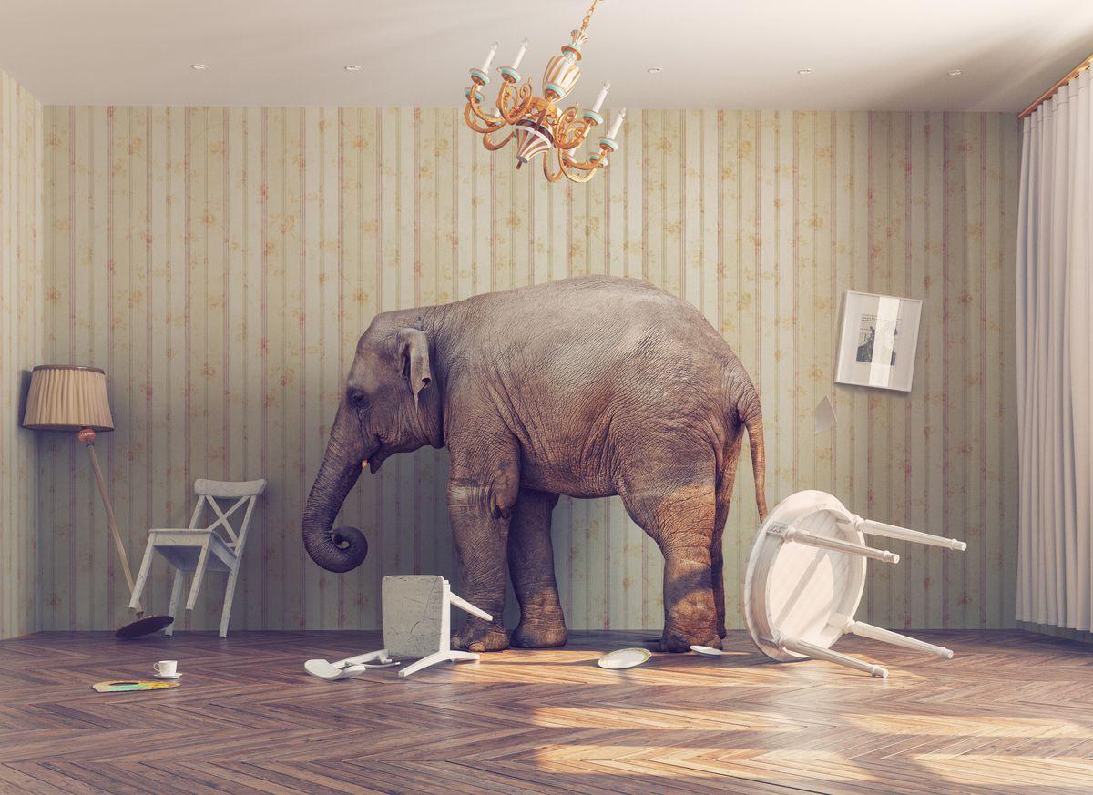 dr elephant