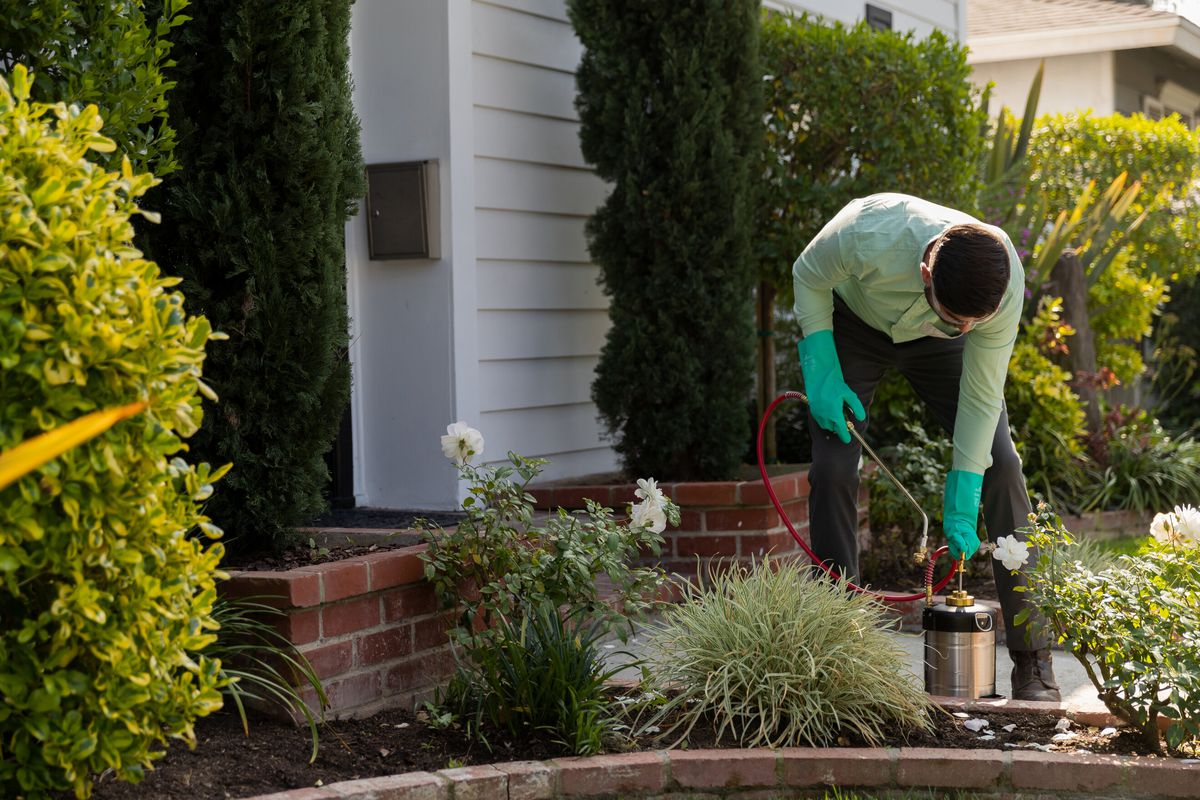 A pest control specialist wearing a green shirt, black pants, and green gloves uses a canister of pest control solution to spray shrubs in a green yard of a white house with red brick detailing.