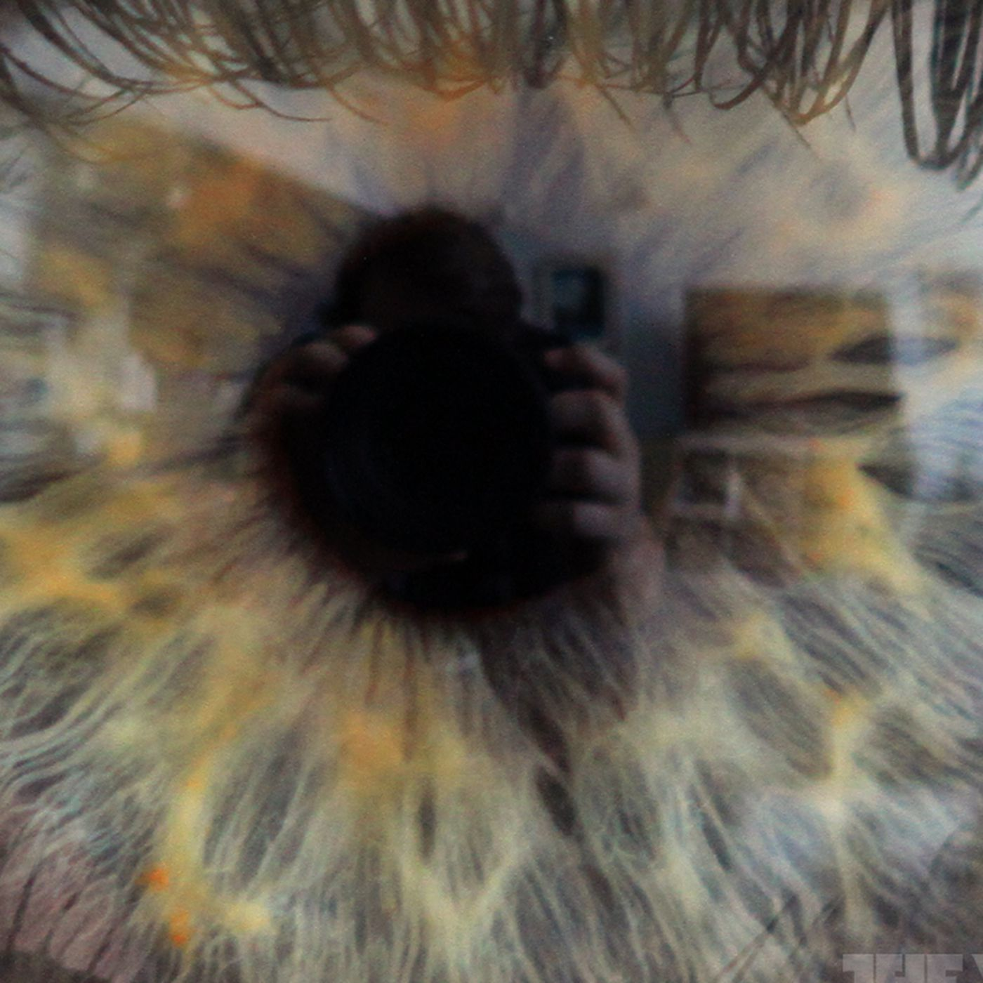 Eyes Change Over Time Thwarting Iris Scanners Research Finds The