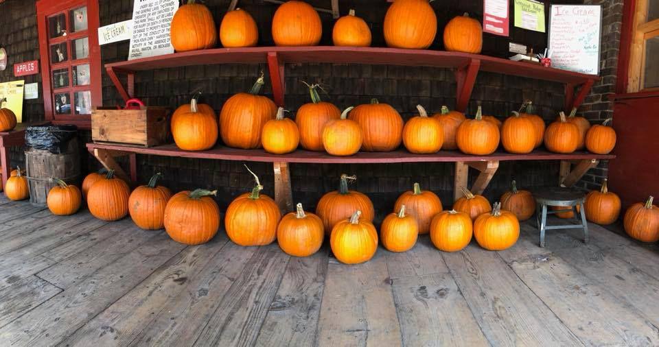 Three shelves of pumpkins on an outdoor deck.