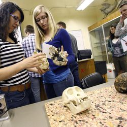 Olivia Masino, left, and Kara Bloomfield compare model skulls during an evolutionary biology class at BYU in Provo on Friday, March 30, 2012.