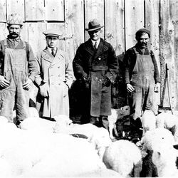 """This image from the 1920s of Greek immigrants and sheep farmers John Thiros, John Dokos, Alex Papegeorge and Mr. Zbanios is on display at Ogden's Union Station as part of """"Weber Works."""""""