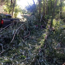 Two brothers, ages 7 and 9, were hospitalized Monday with injuries they suffered when a tree fell on their tent in Provo.