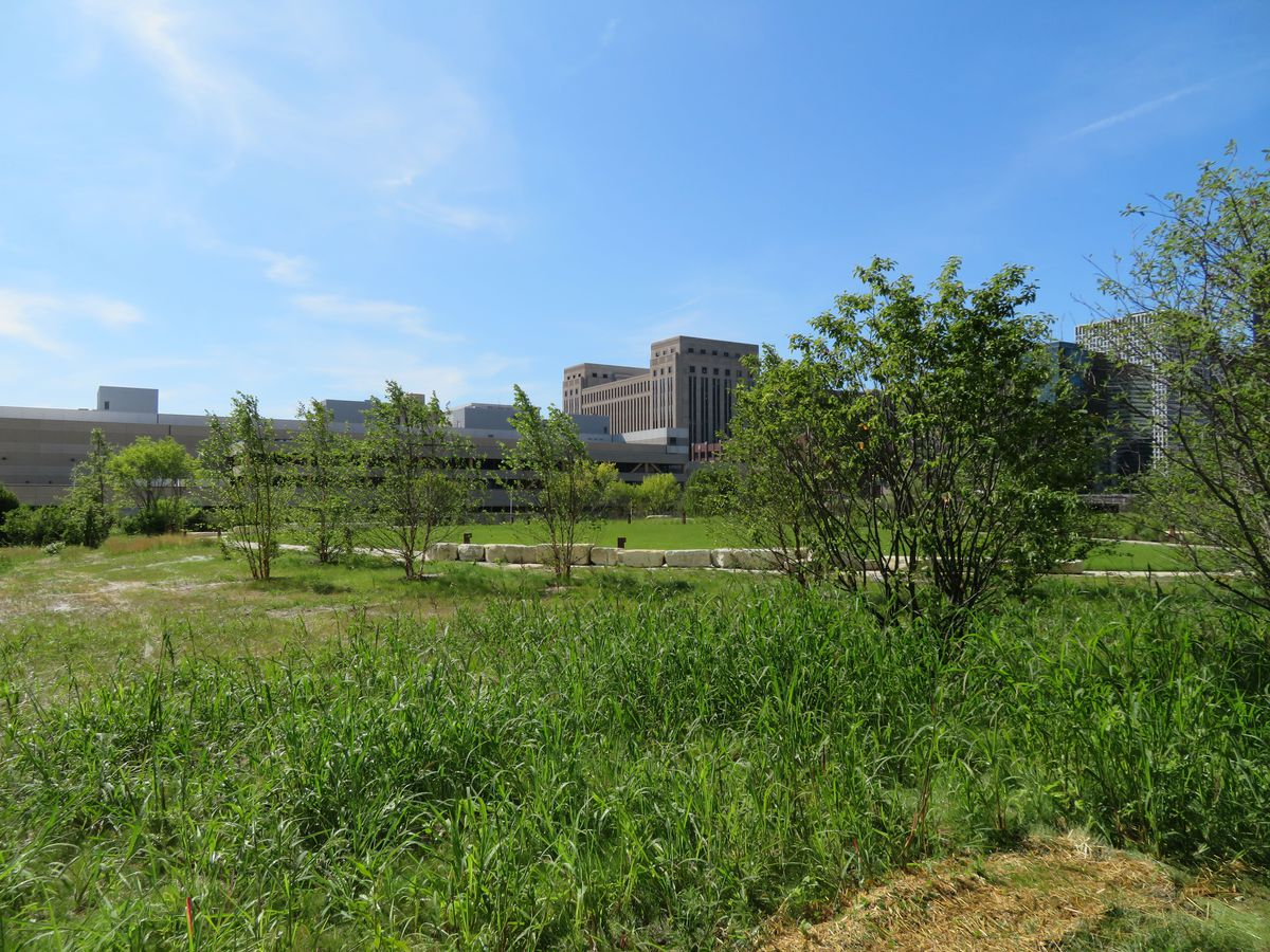 An urban prairie with tall grass, medium bushes, and small trees. There's a circular path lined with limestone blocks. The art deco Old Post Office building is visible beyond.