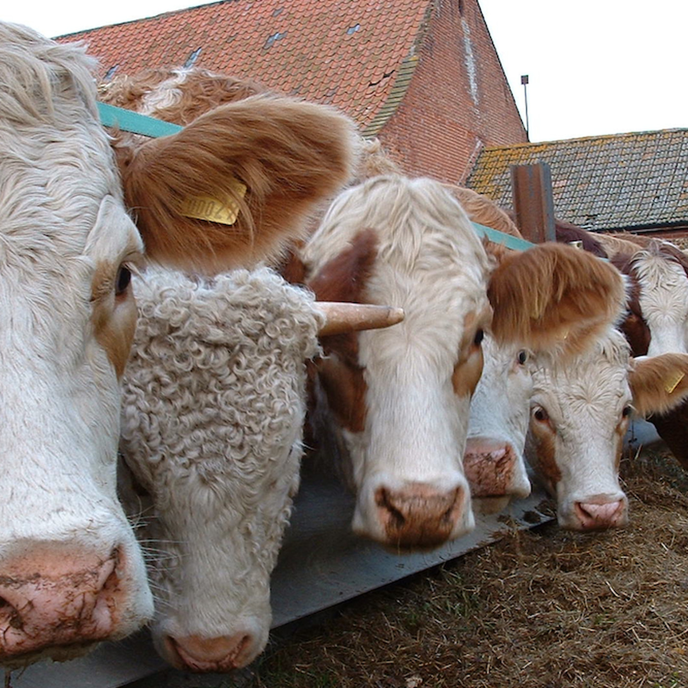 Don't listen to Big Cattle — lab-grown meat should still be