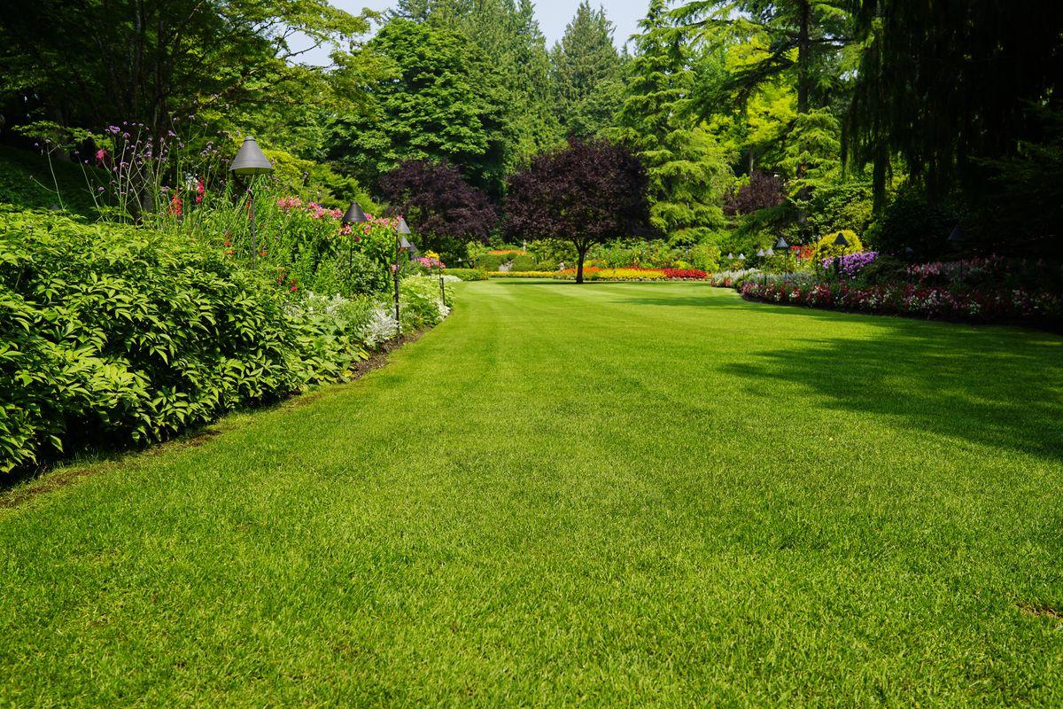 Grow Grass, Lawn Fast