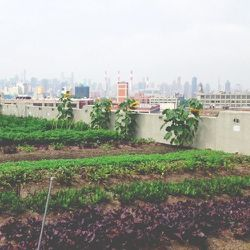 A late morning run with my boyfriend ends at the Brooklyn Grange rooftop farm, where we stock up on fresh veggies.