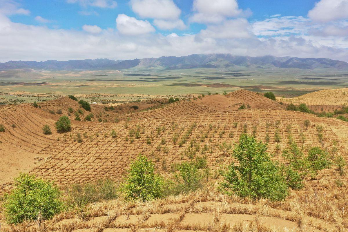 Desertification Control In Qinghai