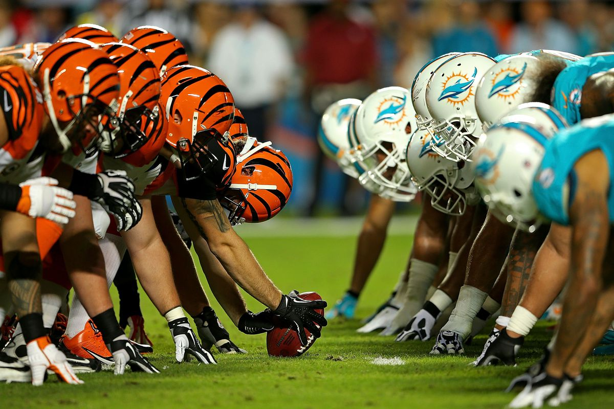 Image result for bengals dolphins