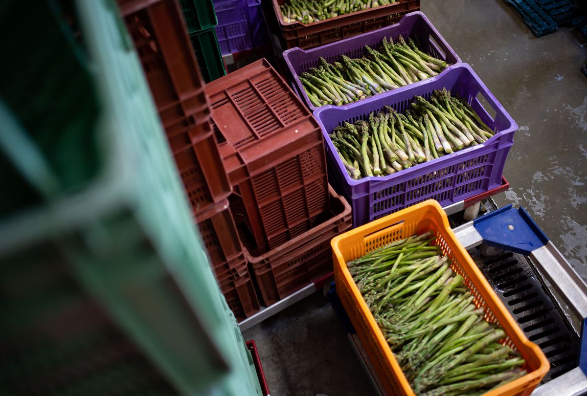 Crates of asparagus stacked outside.