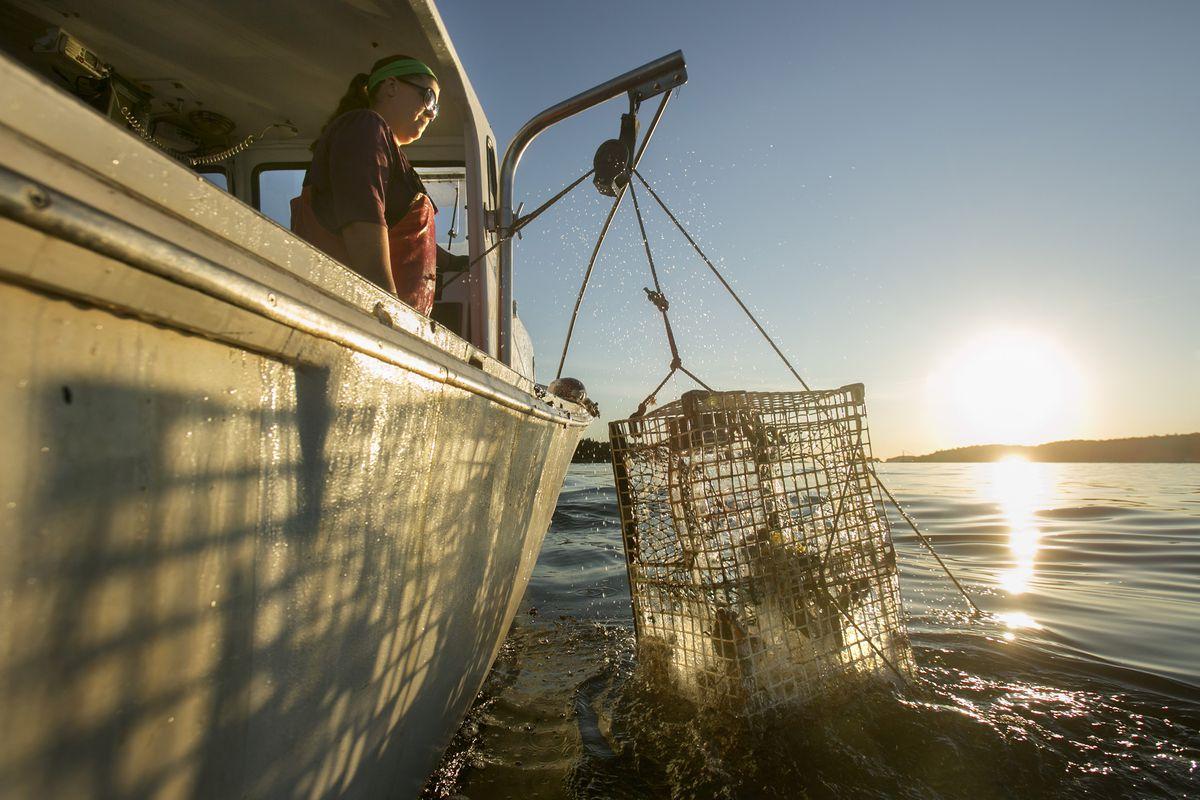 Lobster boat captain Genevieve McDonald raises a lobster trap