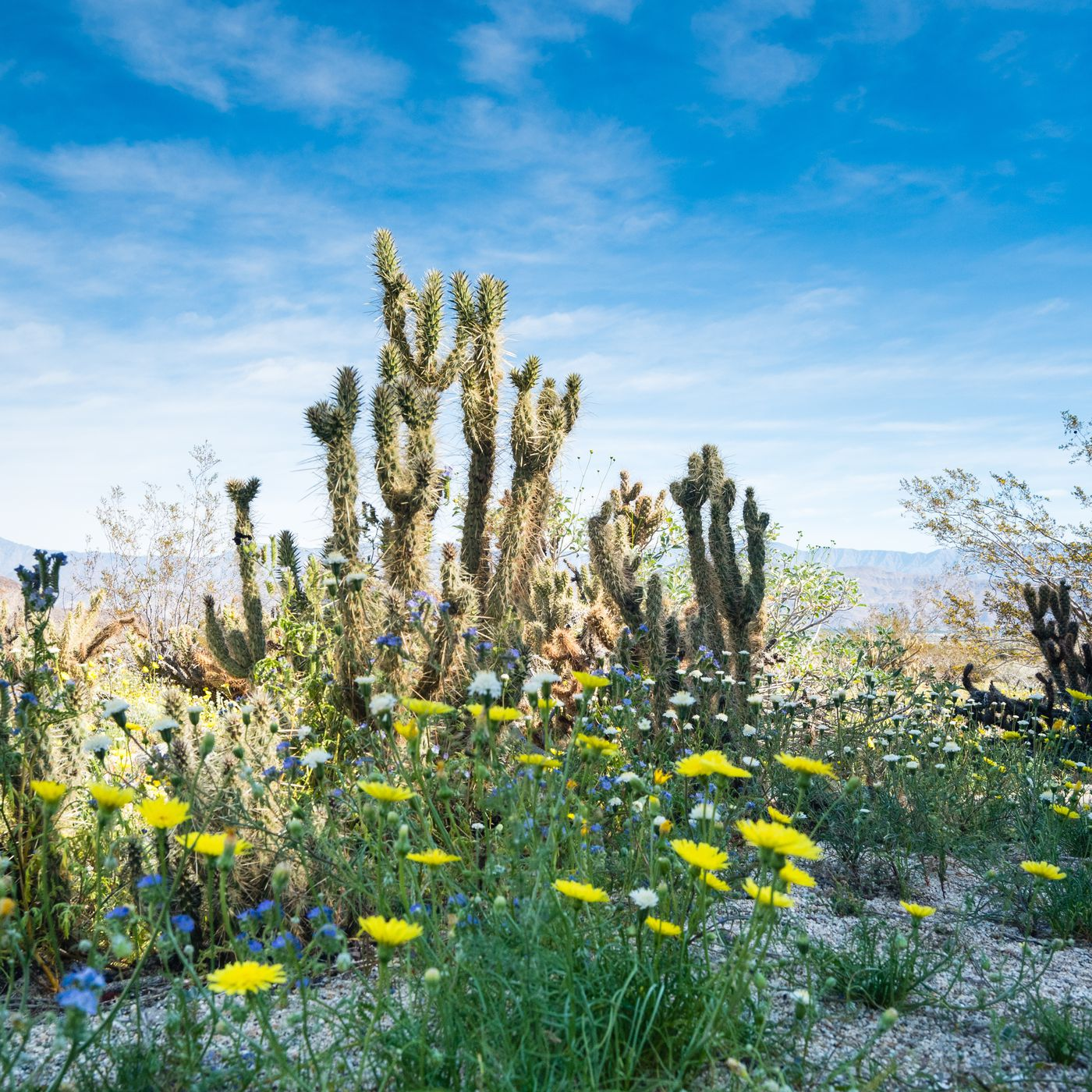 Super bloom see the gorgeous explosion of wildflowers sweeping super bloom see the gorgeous explosion of wildflowers sweeping southern california curbed la izmirmasajfo