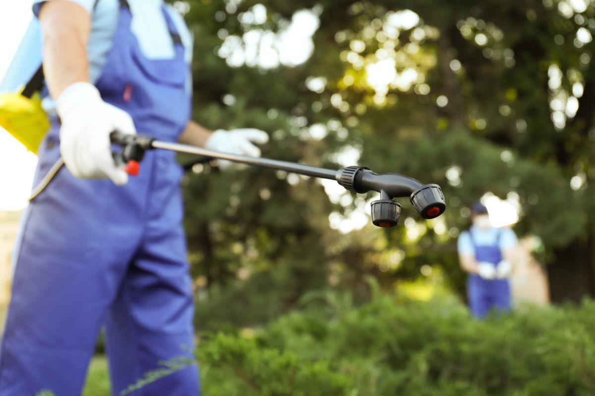 A pest control specialist wearing blue overalls and white gloves sprays pest control solution on green shrubs from a black wand.
