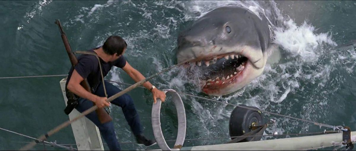 the scientists researching a spike in shark sightings in california