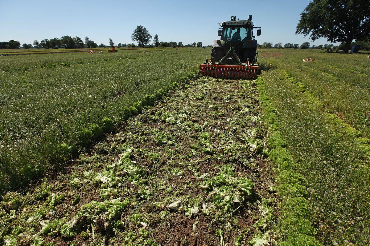Farmers Fear Ruin Following EHEC Outbreak