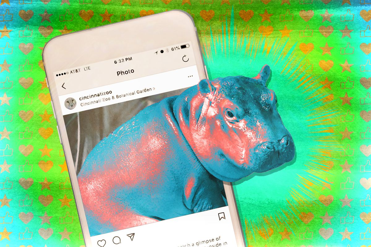 A photo illustration of a baby hippo and a smartphone